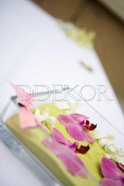 Orchidea pillangóval